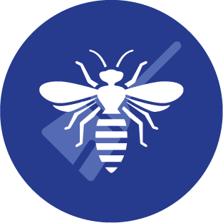 Melbourne Bee Removal